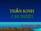 THẦN KINH CHI DƯỚI