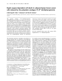 Báo cáo Y học:  Rapid caspase-dependent cell death in cultured human breast cancer cells induced by the polyamine analogue N1,N11-diethylnorspermine