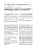 Báo cáo Y học:  Rum1, an inhibitor of cyclin-dependent kinase in fission yeast, is negatively regulated by mitogen-activated protein kinase-mediated phosphorylation at Ser and Thr residues