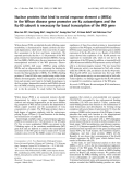 Báo cáo Y học:  Nuclear proteins that bind to metal response element a (MREa) in the Wilson disease gene promoter are Ku autoantigens and the Ku-80 subunit is necessary for basal transcription of the WD gene