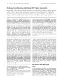 Báo cáo Y học:  Molecular mechanisms underlying SHP-1 gene expression