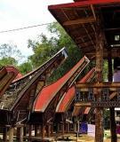 Phong tục tang ma ở bộ tộc Toraja