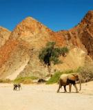 Vẻ đẹp mê hoặc của Namibia
