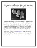 Kết quả bước đầu về hệ thống nuôi luân trùng (Brachionus rotundiformis) mật độ siêu cao