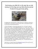 Ảnh hưởng của nhiệt độ và độ mặn lên sự sinh trưởng và tỉ lệ sống của cua biển (Scylla serrata Forskal) trong giai đoạn giống