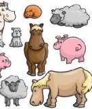 Bảo vệ gia súc mùa lũ