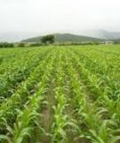Kinh nghiệm trồng bí ngô mật vụ đông
