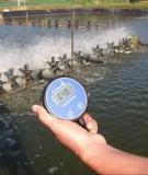 Ảnh hưởng của Nhiệt độ của nước trong nuôi tôm