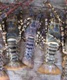 Một số bệnh thường gặp ở tôm cá
