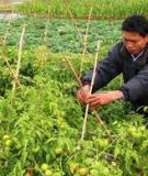 Tin học ứng dụng trong ngành nông nghiệp
