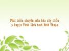 Việc phát triển chuyên môn hóa cây điều ở Tánh Linh