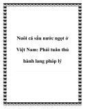 Nuôi cá sấu nước ngọt ở Việt Nam: Phải tuân thủ hành lang pháp lý