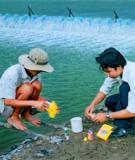 Nhiệt độ của nước nuôi tôm sú