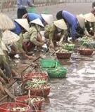 Nhịp cầu nhà nông: Nuôi tôm sú - Những khuyến cáo đáng lưu ý