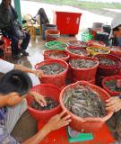Tham khảo bệnh đốm trắng ở cá