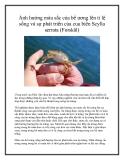 Ảnh hưởng màu sắc của bể ương lên tỉ lệ sống và sự phát triển của cua biển Scylla serrata (Forskål)
