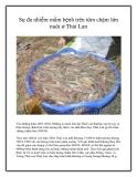 Sự đa nhiễm mầm bệnh trên tôm chậm lớn nuôi ở Thái Lan