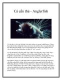 Cá cần thủ - Anglerfish