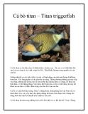Cá bò titan – Titan triggerfish