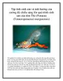 Tập tính sinh sản và ảnh hưởng của cường độ chiếu sáng lên quá trình sinh sản của tôm Thẻ (Penaeus (Fenneropenaeus) merguiensis)