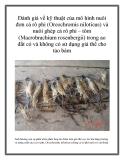 Đánh giá về kỹ thuật của mô hình nuôi đơn cá rô phi (Oreochromis niloticus) và nuôi ghép cá rô phi – tôm (Macrobrachium rosenbergii) trong ao đất có và không có sử dụng giá thể cho tảo bám