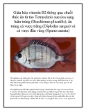 Giàu hóa vitamin B2 thông qua chuỗi thức ăn từ tảo Tetraselmis suecica sang luân trùng (Brachionus plicatilis), ấu trùng cá vược trắng (Diplodus sargus) và cá vược đầu vàng (Sparus aurata)