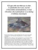 Kết quả sinh sản nhân tạo cá chài (Leptobarbus hoeveni), mè hôi (Osteochilus melanopleurus), ét mọi (Morulius chrysoplekadion) và cá duồng (Cirrhinus microlepis)
