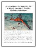 Myxozoan Sinuolinea phyllopteryxa n. sp. ký sinh trong thận cá rồng biển Phyllopteryx taeniolatus