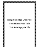 Nâng Cao Hiệu Quả Nuôi Tôm Hùm: Phải Tuân Thủ Bốn Nguyên Tắc