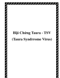 Hội Chứng Taura - TSV (Taura Syndrrome Virus)