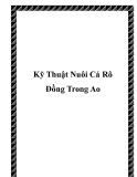 Kỹ Thuật Nuôi Cá Rô Đồng Trong Ao