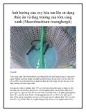 Ảnh hưởng của oxy hòa tan lên sử dụng thức ăn và tăng trưởng của tôm càng xanh (Macrobrachium rosengbergii)