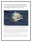 Ảnh hưởng của Ion hóa hydrogen đến tỉ lệ nở của trứng tôm càng xanh, Maccrobrachium rosenbergii ( de Man ) trong nước lợ