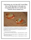 Ảnh hưởng của việc thay thế Casein bằng bột cá, bột đậu nành và bột giáp xác trong khẩu phần thức ăn của bào ngư (Haliotis discus hannai Ino)