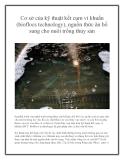 Cơ sở của kỹ thuật kết cụm vi khuẩn (bioflocs technology), nguồn thức ăn bổ sung cho nuôi trồng thủy sản