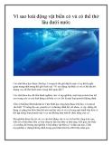 Vì sao loài động vật biển có vú có thể thở lâu dưới nước