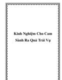 Kinh Nghiệm Cho Cam Sành Ra Quả Trái Vụ
