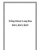 Trồng Khoai Lang Rau Klr1, Klr3, Klr5