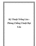 Kỹ Thuật Trồng Lúa Phòng Chống Chuột Hại Lúa