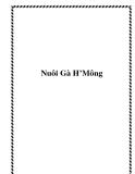 Nuôi Gà H'Mông
