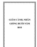 GIÂM CÀNH, NHÂN GIỐNG BƯỞI NĂM ROI