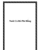 Nuôi Cá Rô Phi Hồng