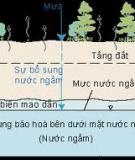 Sự khác biệt các thành phần ion trong bể nước nhân tạo