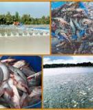 Kỹ thuật nuôi thủy sản nước lợ