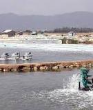 Danh mục các loại thủy sản nước lợ và nước mặn Việt Nam