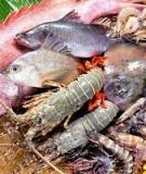 Dinh dưỡng và thức ăn nuôi tôm cá - ThS. Nguyễn Quang Thủy