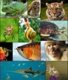 Các loài vật trong Tiếng Anh (Animals in English)