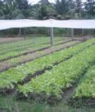 Các mô hình trồng rau nhà lưới