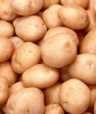 Kỹ thuật bảo quản khoai tây