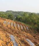 Kỹ thuật phục hồi đất trồng chè